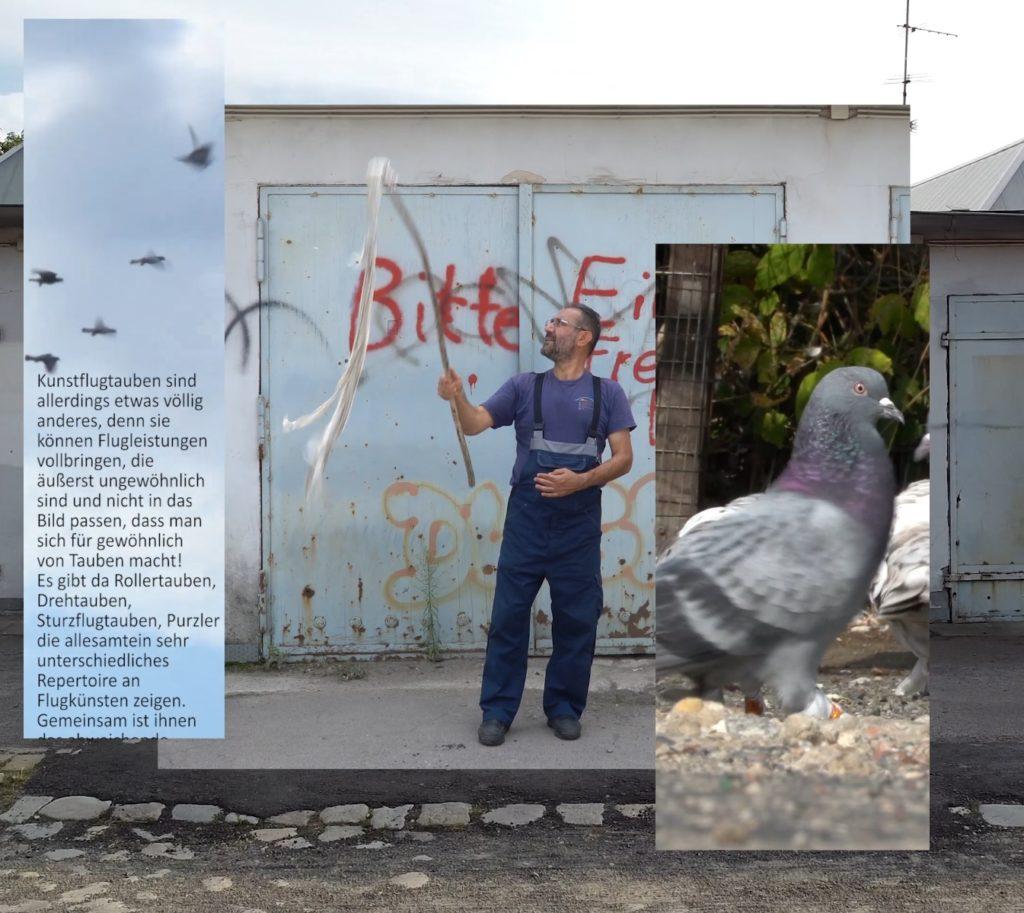 Taubengeflatter